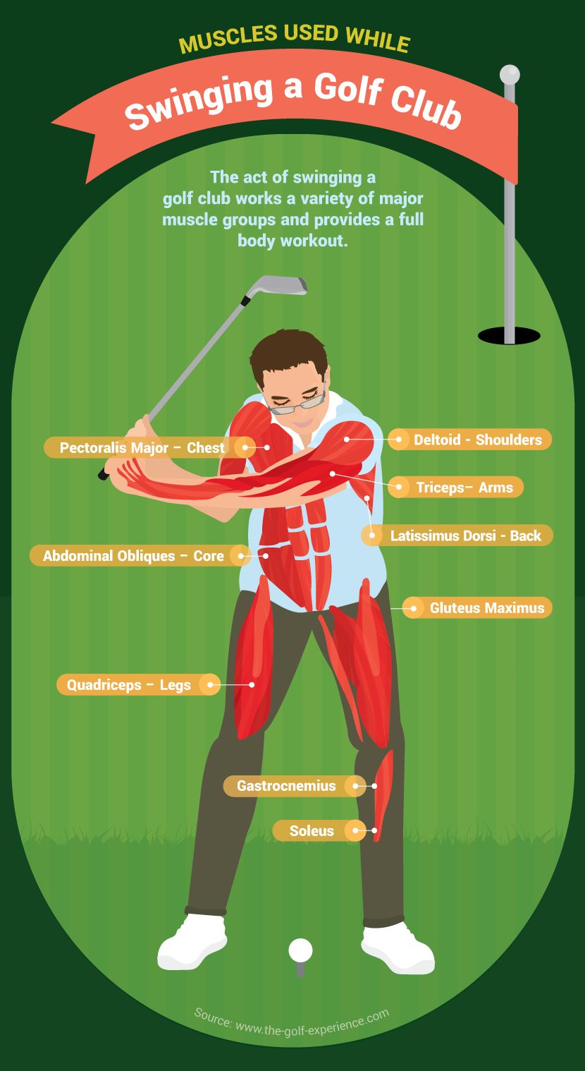 muscles-used-golf